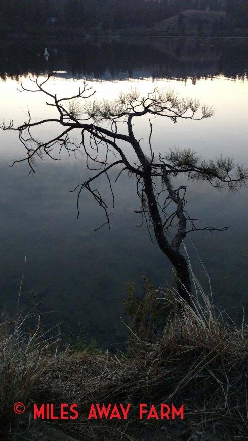 Curlew Lake State Park, WA.