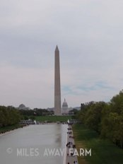 Reflecting Pool/Washington Monument from Lincoln Memorial