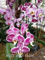 HUGE Orchid exhibit