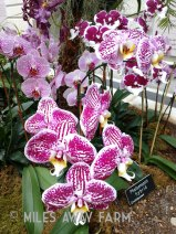 HUGE Orchid exhibit